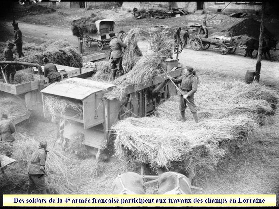 Des soldats de la 4e armée française participent aux travaux des champs en Lorraine