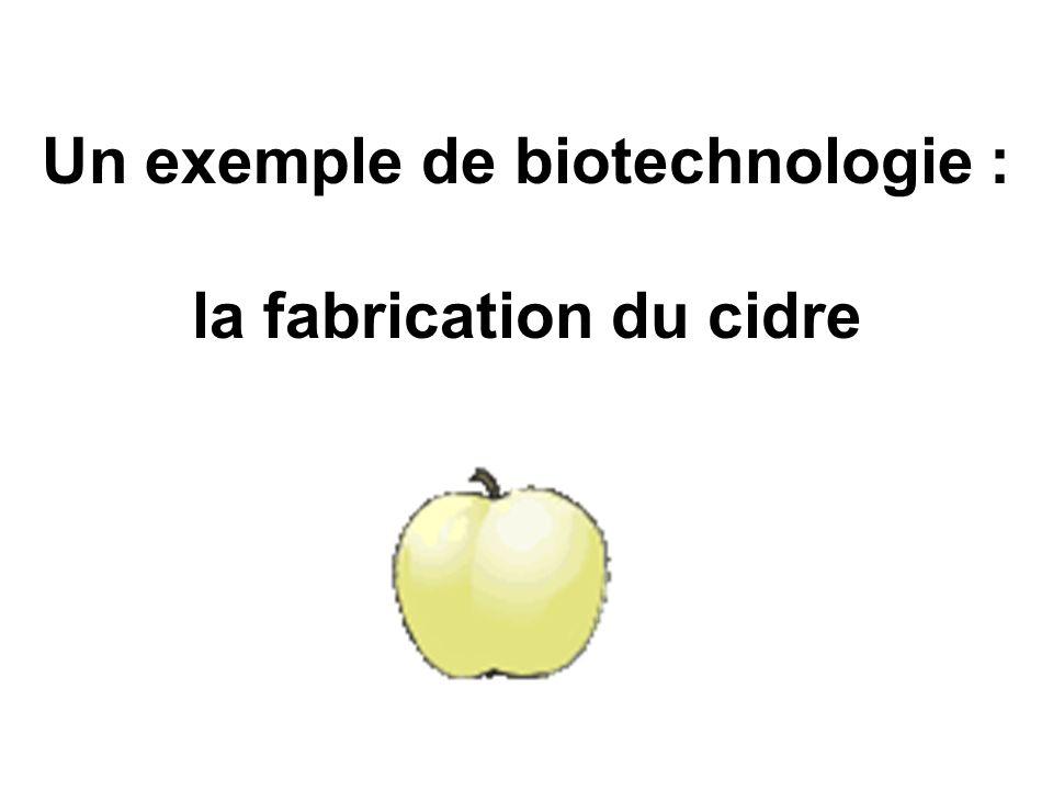 Un exemple de biotechnologie : la fabrication du cidre