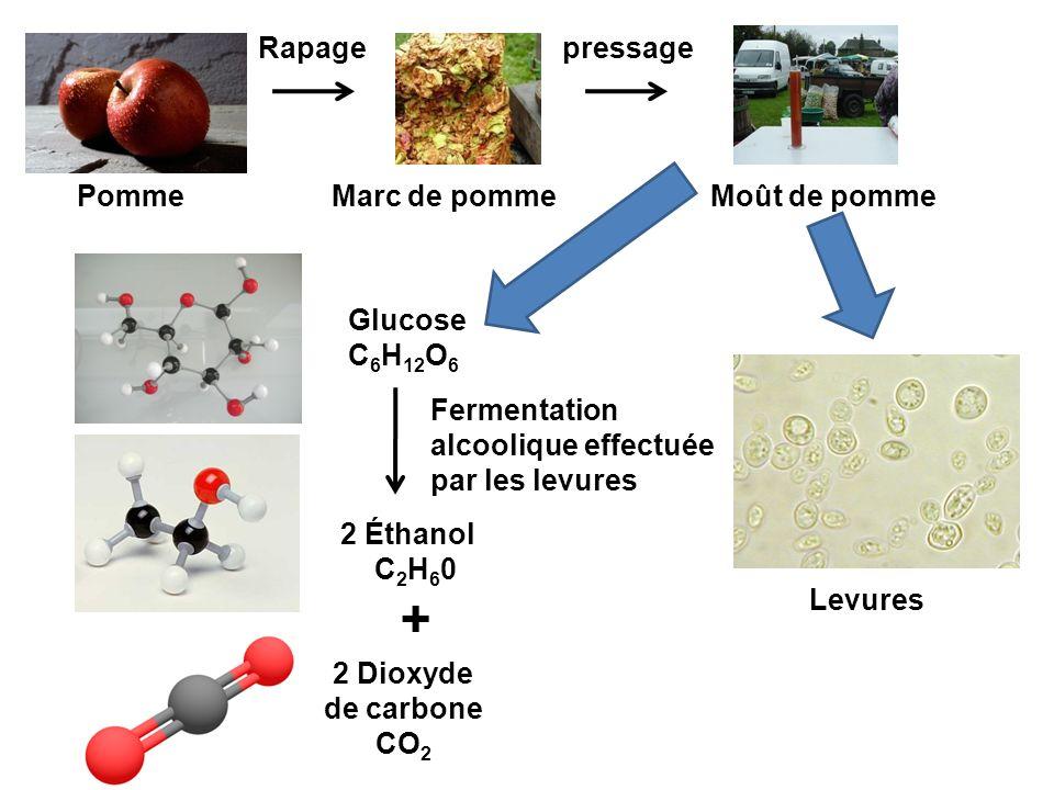 + Rapage pressage Pomme Marc de pomme Moût de pomme Glucose C6H12O6