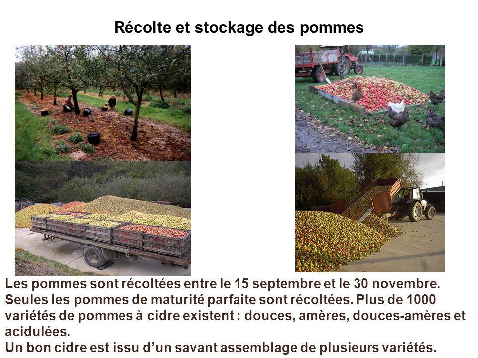 Récolte et stockage des pommes