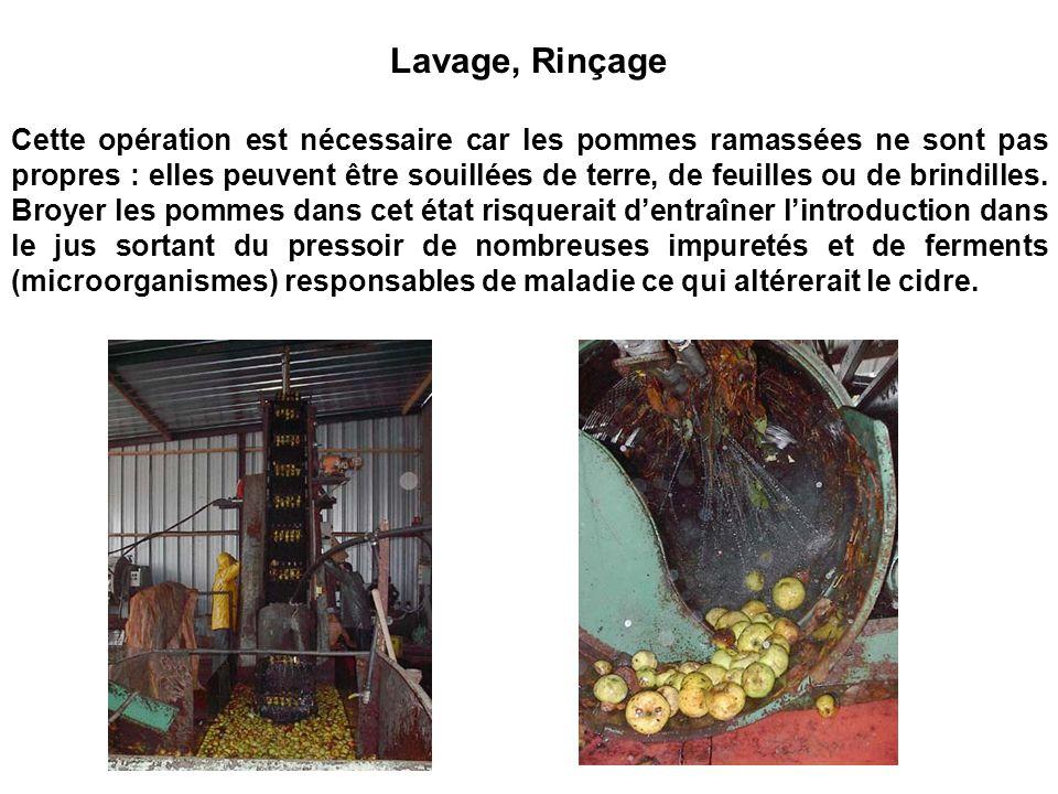 Lavage, Rinçage