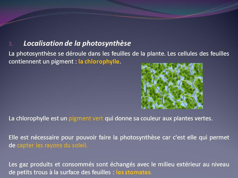 Localisation de la photosynthèse