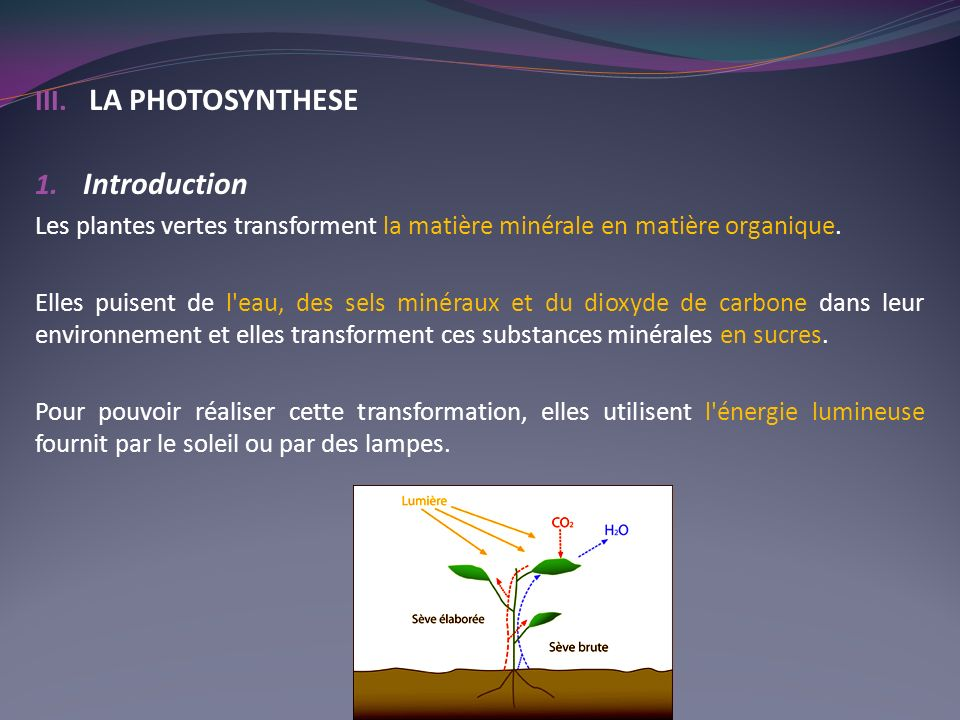 LA PHOTOSYNTHESE Introduction