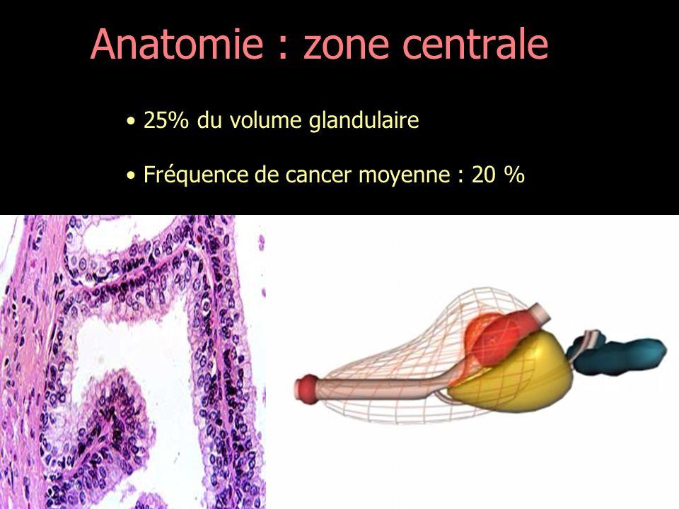 Anatomie : zone centrale
