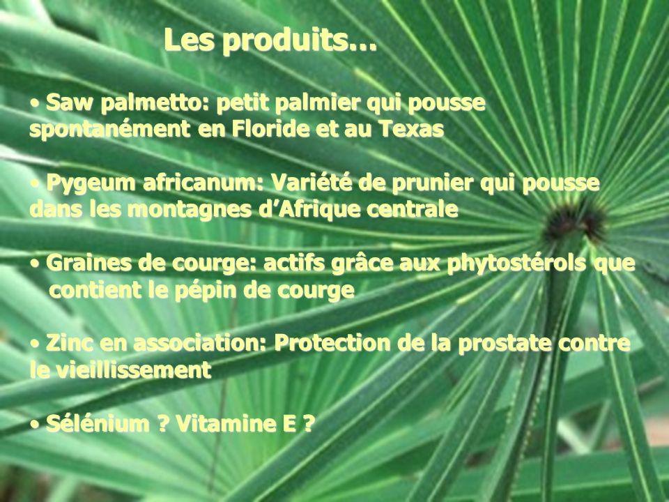 Les produits… Saw palmetto: petit palmier qui pousse spontanément en Floride et au Texas.