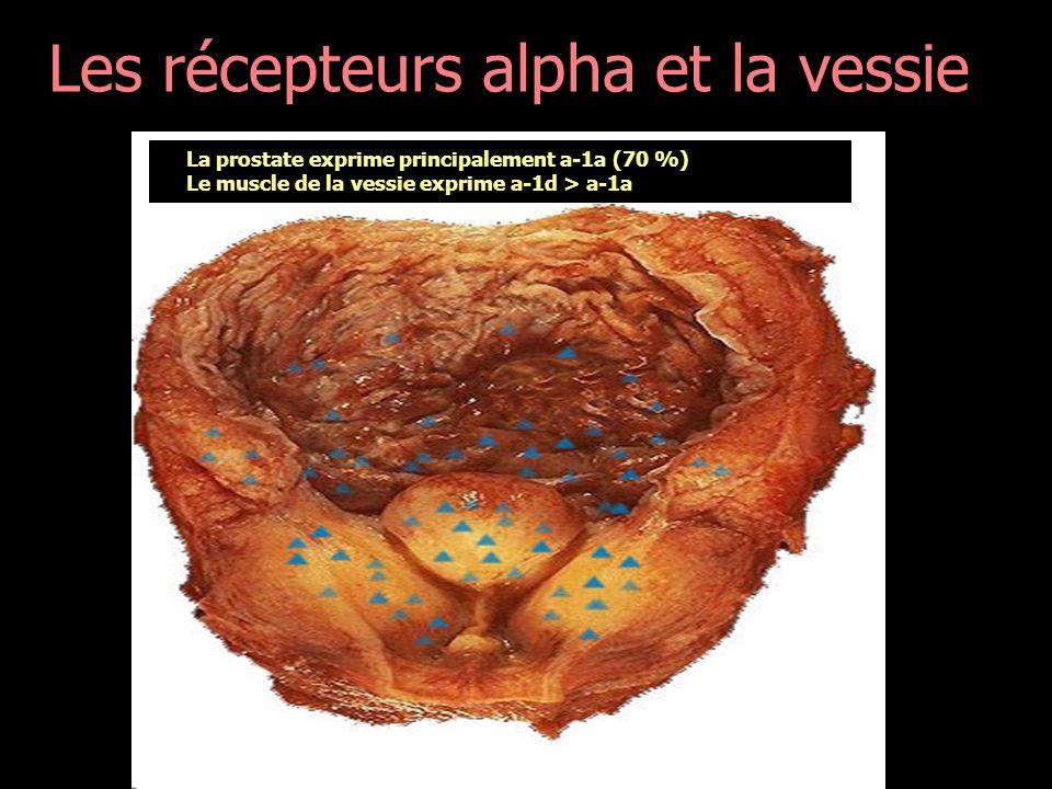 Les récepteurs alpha et la vessie