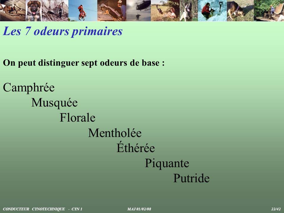 Les 7 odeurs primaires Camphrée Musquée Florale Mentholée Éthérée