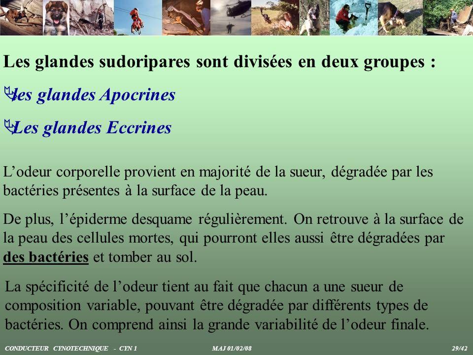 Les glandes sudoripares sont divisées en deux groupes :