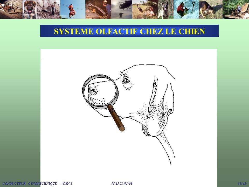 SYSTEME OLFACTIF CHEZ LE CHIEN
