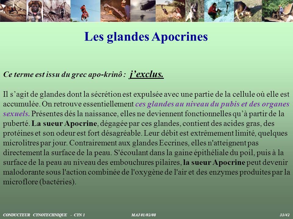 Les glandes Apocrines Ce terme est issu du grec apo-krinô : j'exclus.