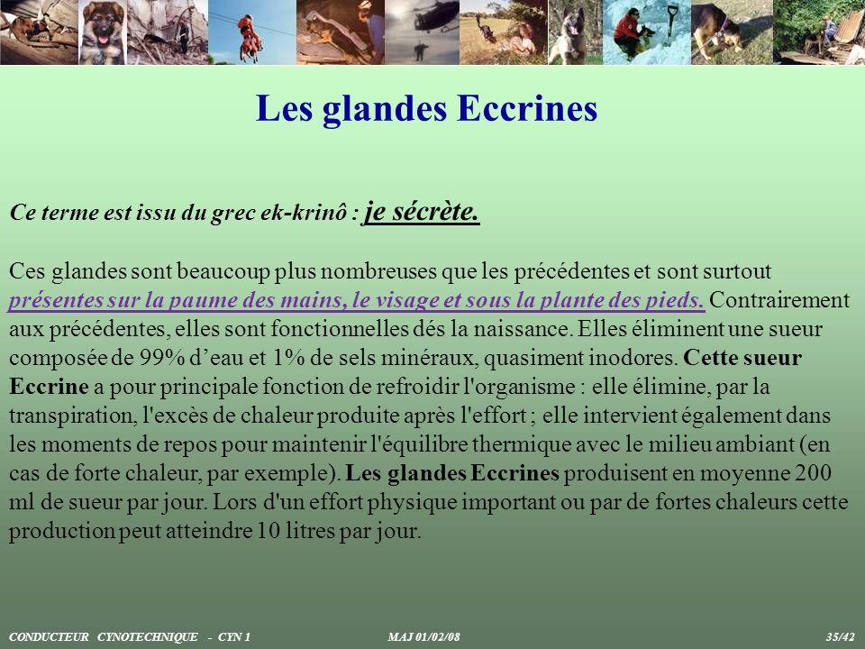 Les glandes Eccrines Ce terme est issu du grec ek-krinô : je sécrète.