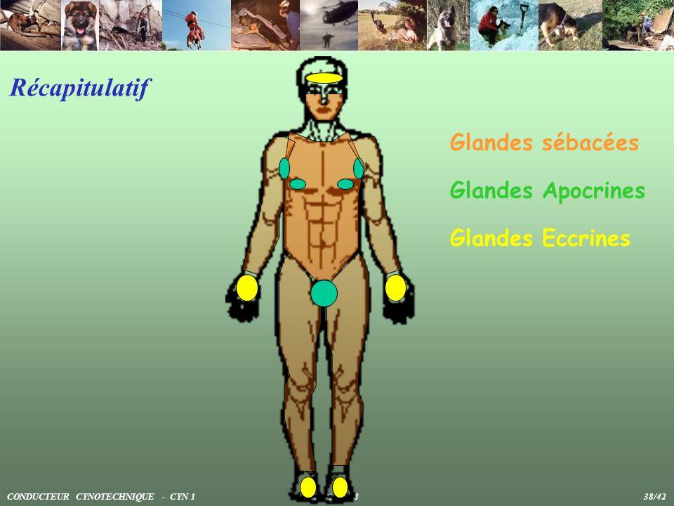 Récapitulatif Glandes sébacées Glandes Apocrines Glandes Eccrines