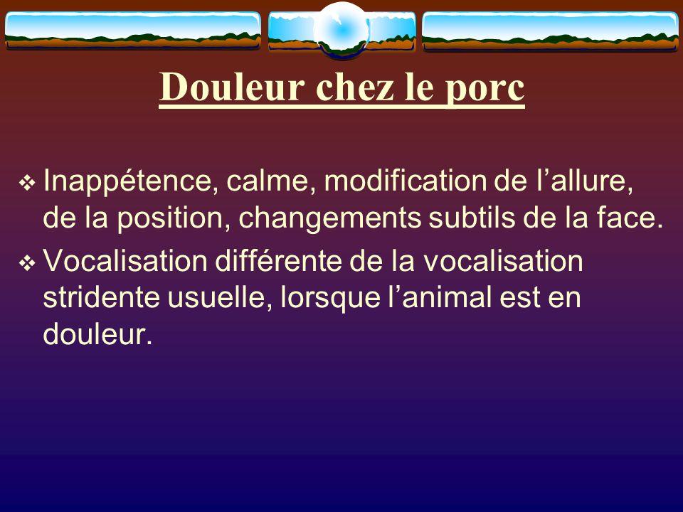 Douleur chez le porc Inappétence, calme, modification de l'allure, de la position, changements subtils de la face.