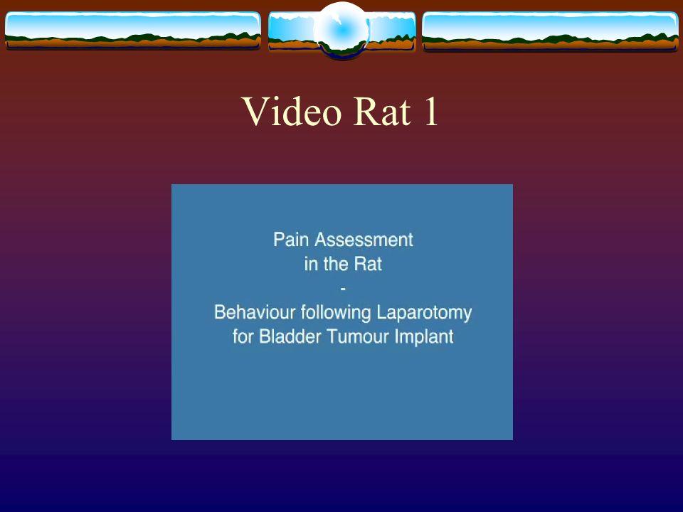 Video Rat 1