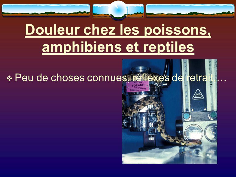 Douleur chez les poissons, amphibiens et reptiles