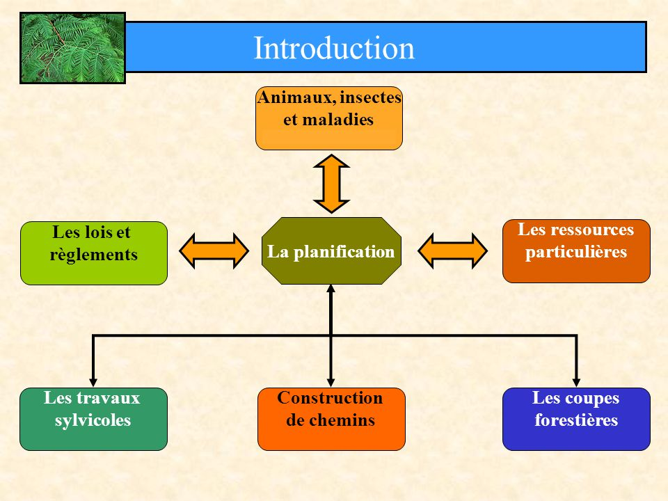 Introduction Animaux, insectes et maladies La planification