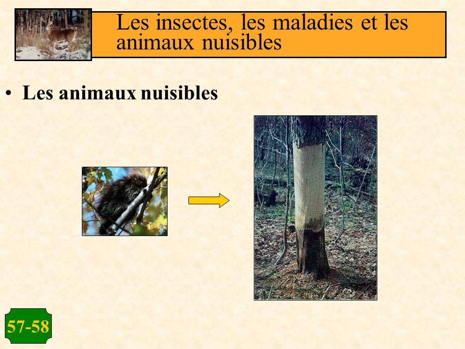 Les insectes, les maladies et les animaux nuisibles