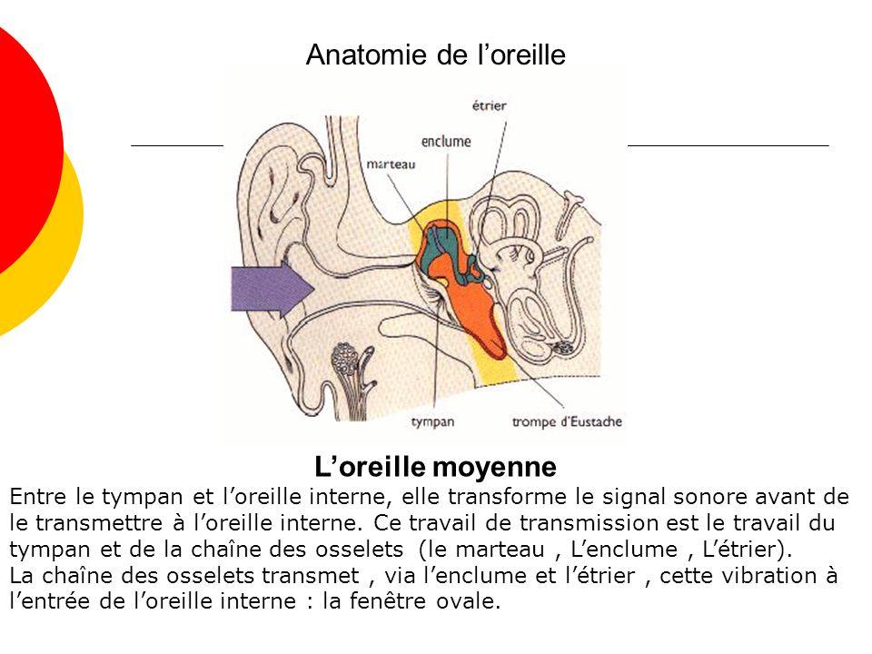 Anatomie de l'oreille L'oreille moyenne
