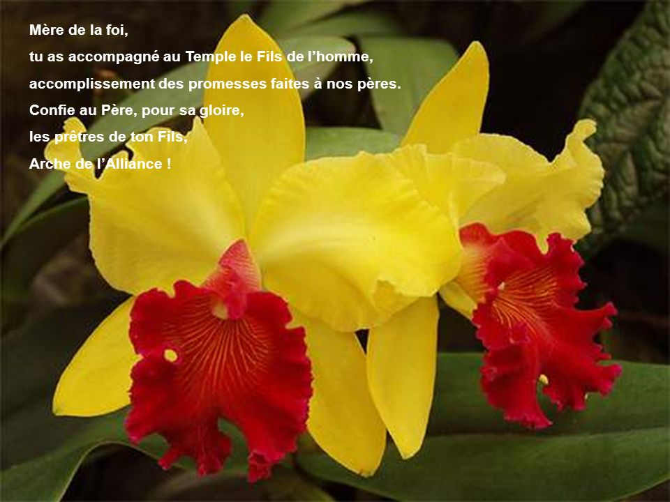Mère de la foi, tu as accompagné au Temple le Fils de l'homme, accomplissement des promesses faites à nos pères.