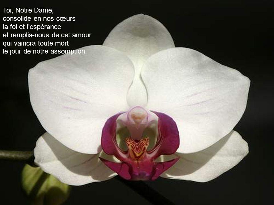 Toi, Notre Dame, consolide en nos cœurs. la foi et l'espérance. et remplis-nous de cet amour. qui vaincra toute mort.