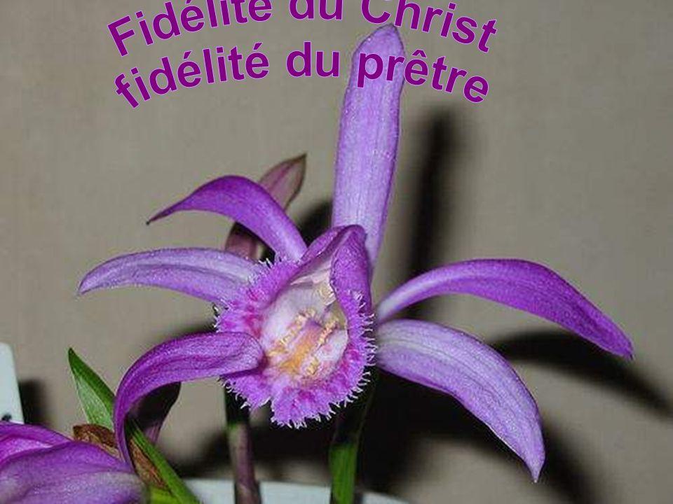 Fidélité du Christ fidélité du prêtre