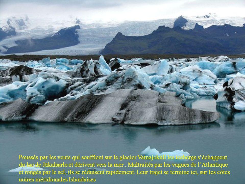 Poussés par les vents qui soufflent sur le glacier Vatnajoküll les icebergs s'échappent du lac de Jäkalsarlo et dérivent vers la mer .