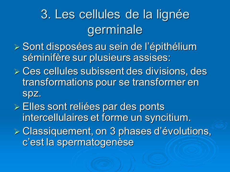 3. Les cellules de la lignée germinale