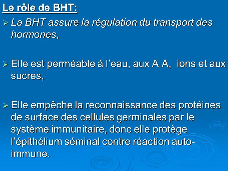 Le rôle de BHT: La BHT assure la régulation du transport des hormones, Elle est perméable à l'eau, aux A A, ions et aux sucres,