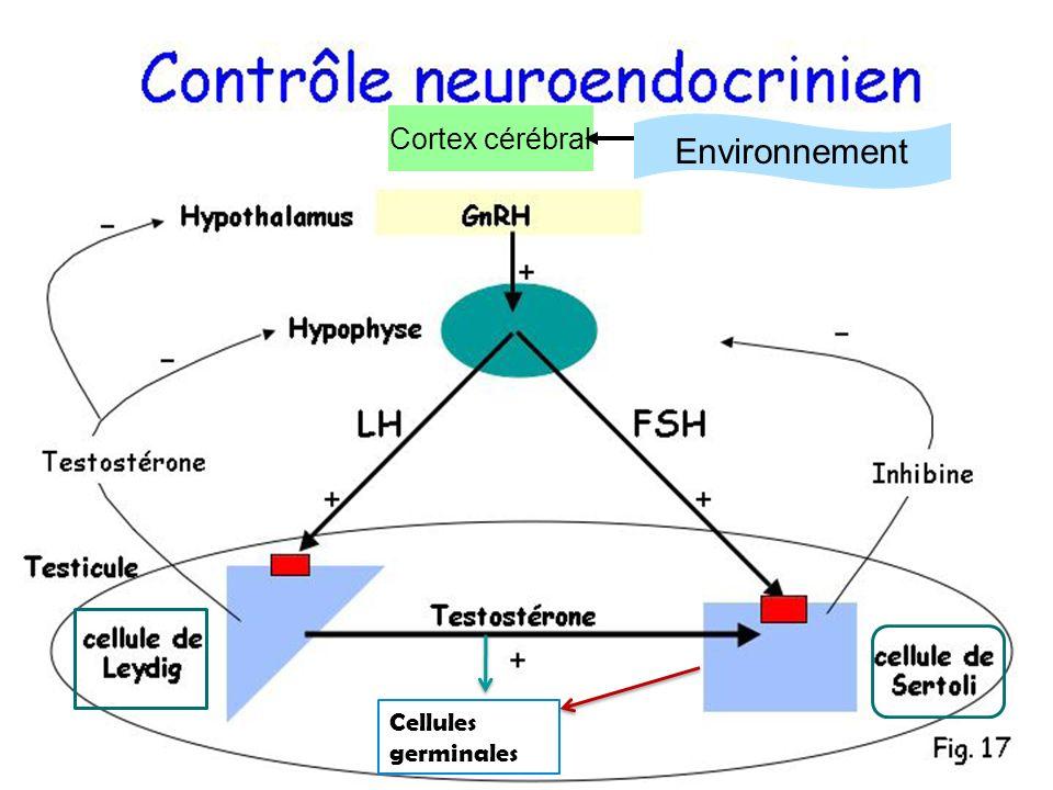 Cortex cérébral Environnement Cellules germinales