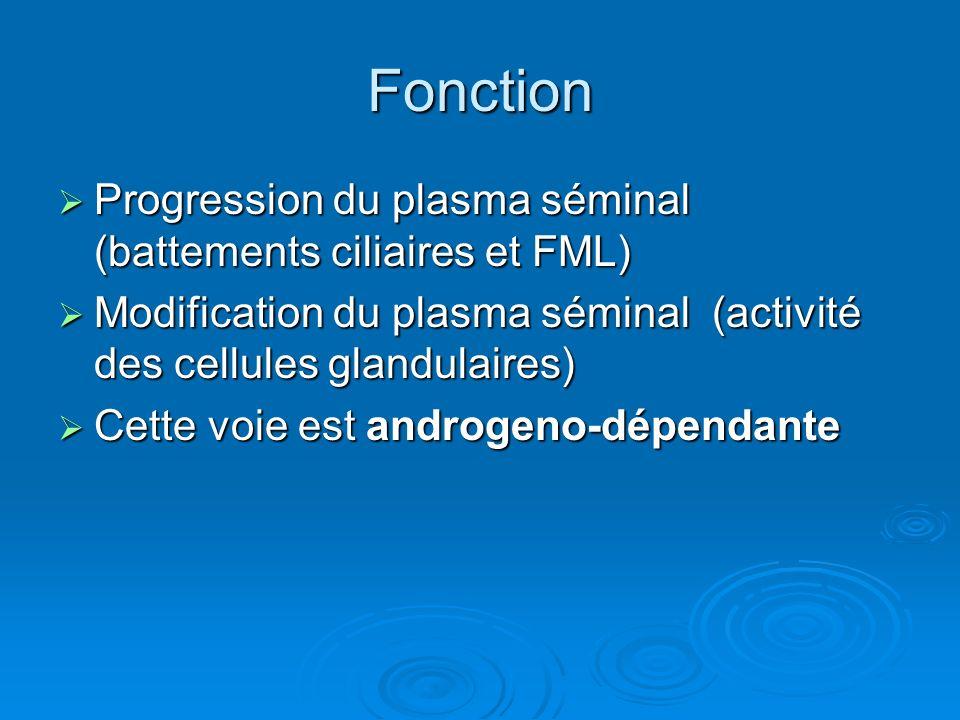 Fonction Progression du plasma séminal (battements ciliaires et FML)