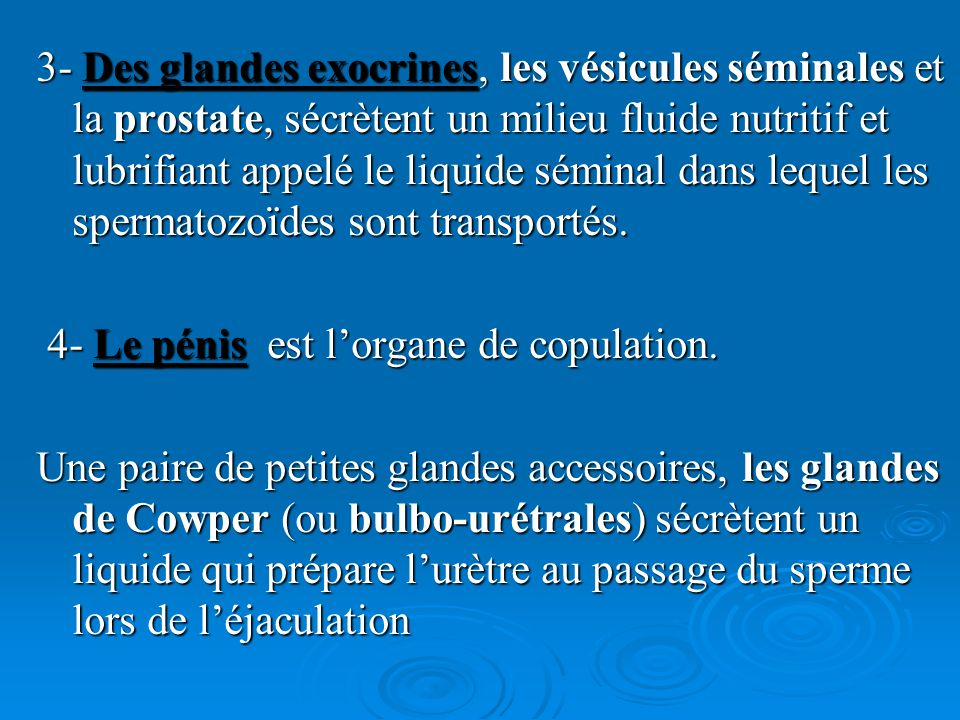 3- Des glandes exocrines, les vésicules séminales et la prostate, sécrètent un milieu fluide nutritif et lubrifiant appelé le liquide séminal dans lequel les spermatozoïdes sont transportés.