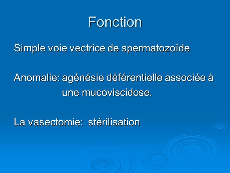 Fonction Simple voie vectrice de spermatozoïde