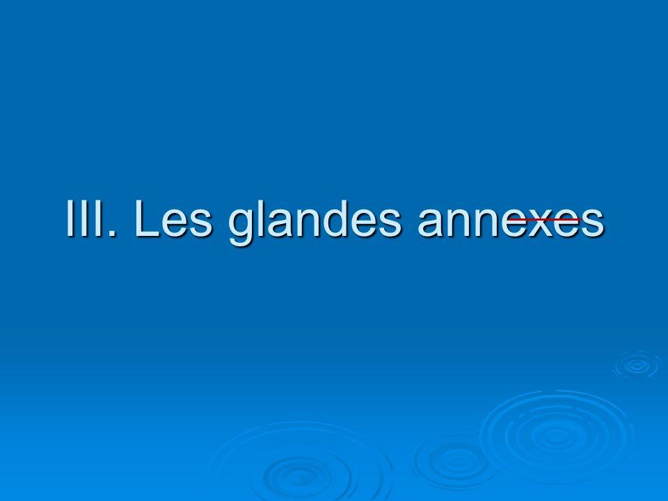 III. Les glandes annexes