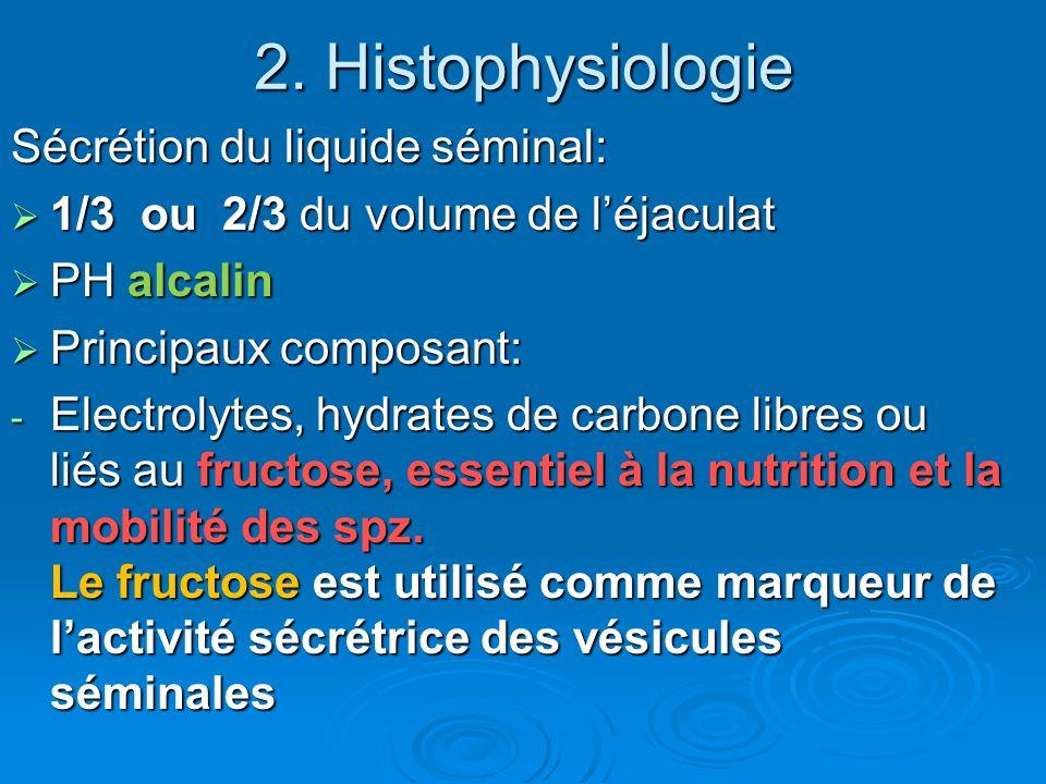 2. Histophysiologie Sécrétion du liquide séminal: