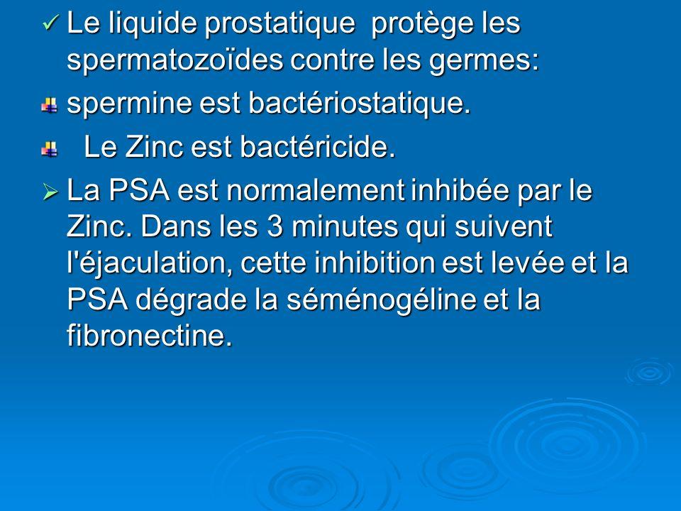 Le liquide prostatique protège les spermatozoïdes contre les germes: