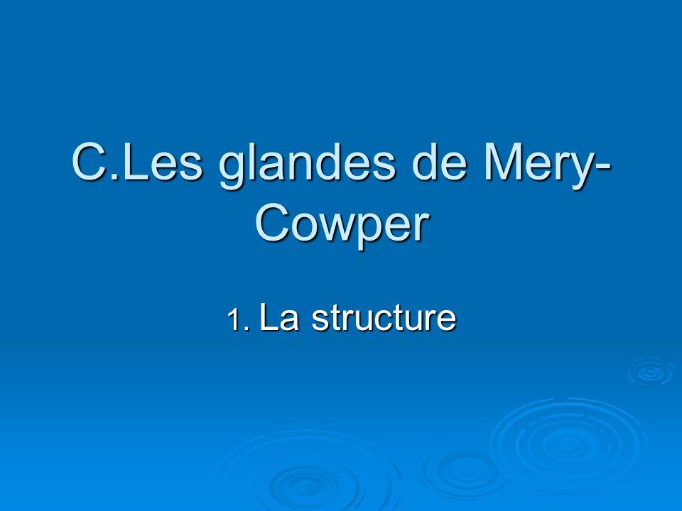 C.Les glandes de Mery-Cowper