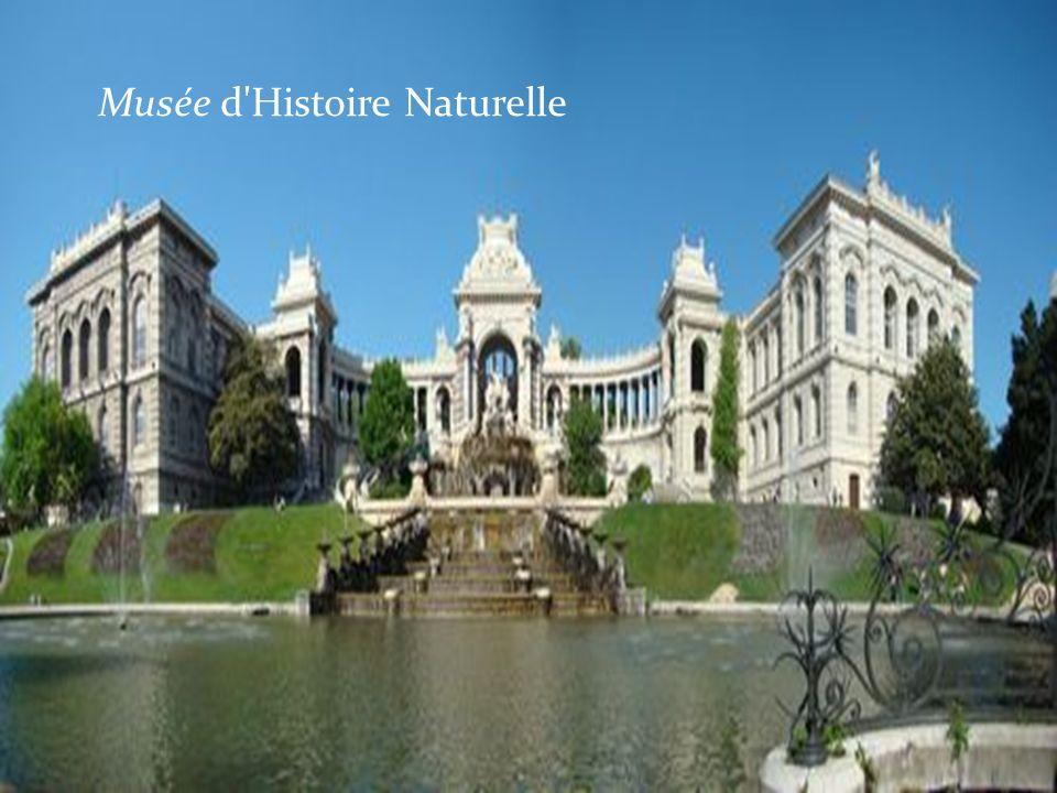 Musée d Histoire Naturelle