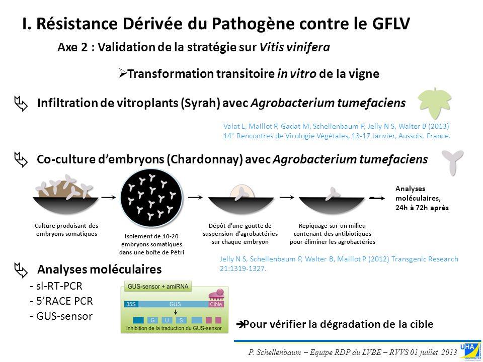 I. Résistance Dérivée du Pathogène contre le GFLV