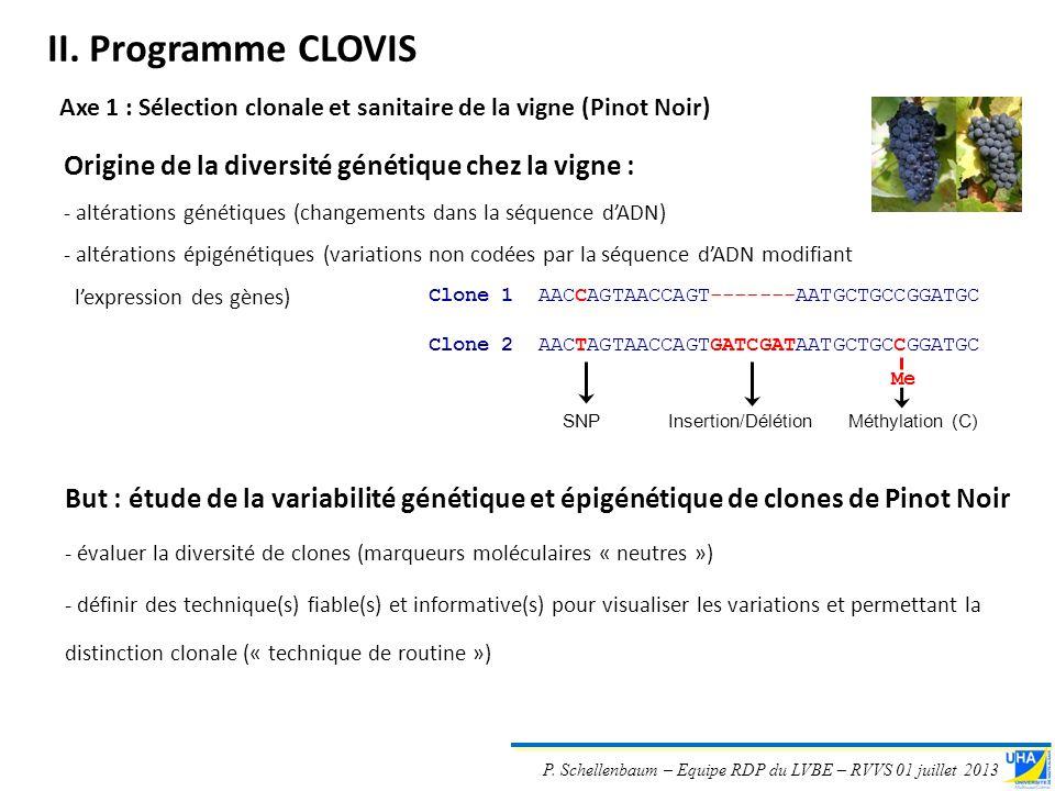 II. Programme CLOVIS Origine de la diversité génétique chez la vigne :