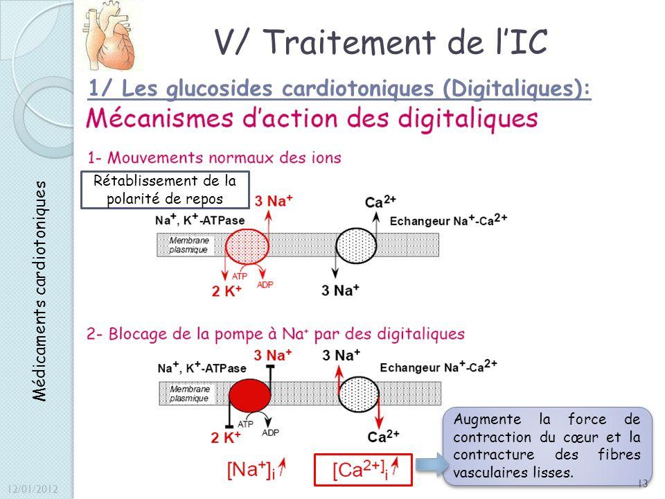 V/ Traitement de l'IC 1/ Les glucosides cardiotoniques (Digitaliques):
