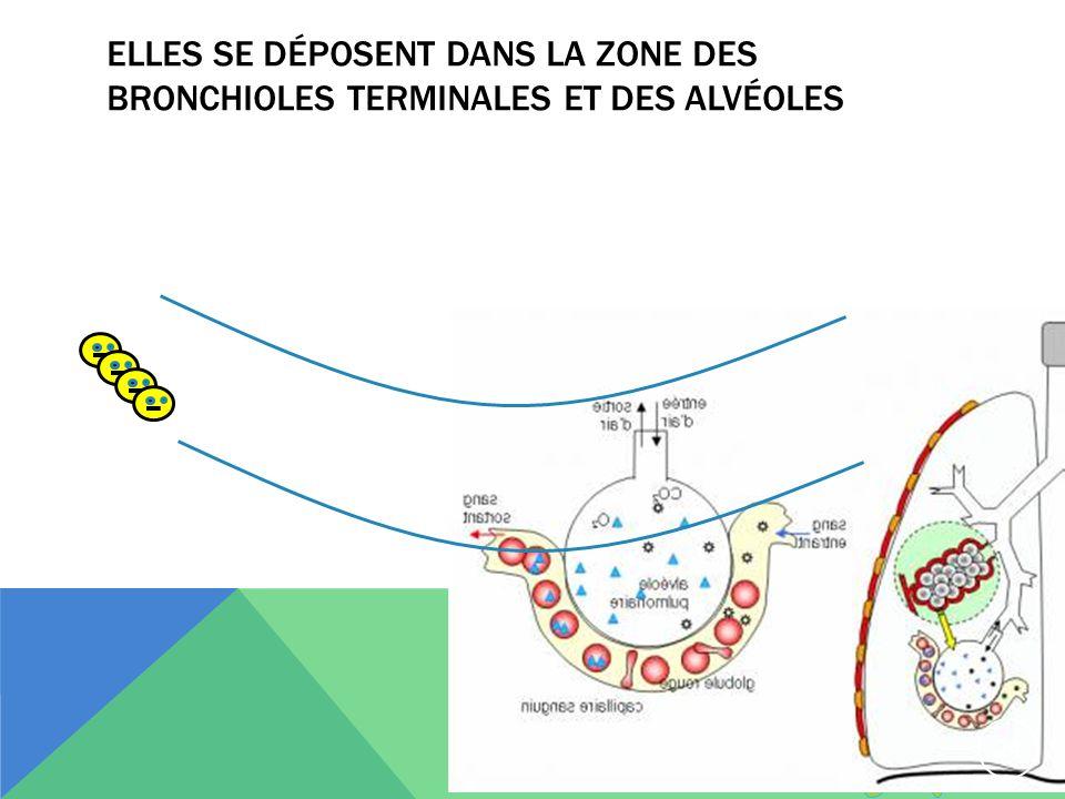Elles se déposent dans la zone des bronchioles terminales et des alvéoles