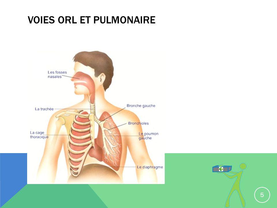 Voies ORL et pulmonaire