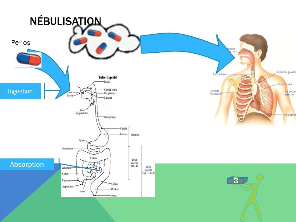 nébulisation Per os Ingestion Absorption