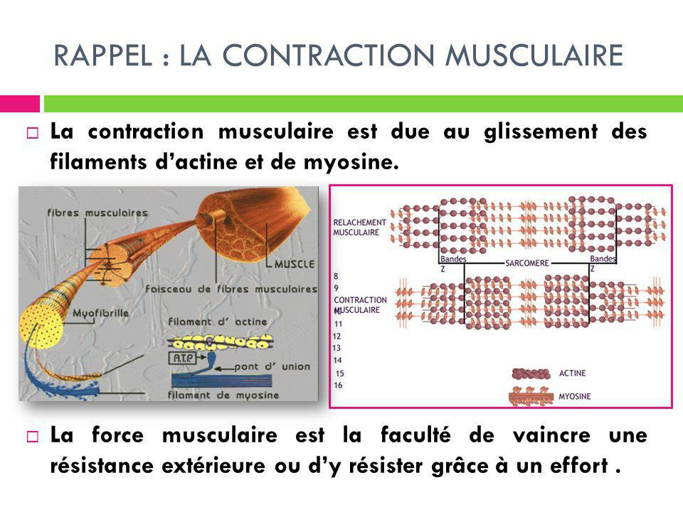 RAPPEL : LA CONTRACTION MUSCULAIRE