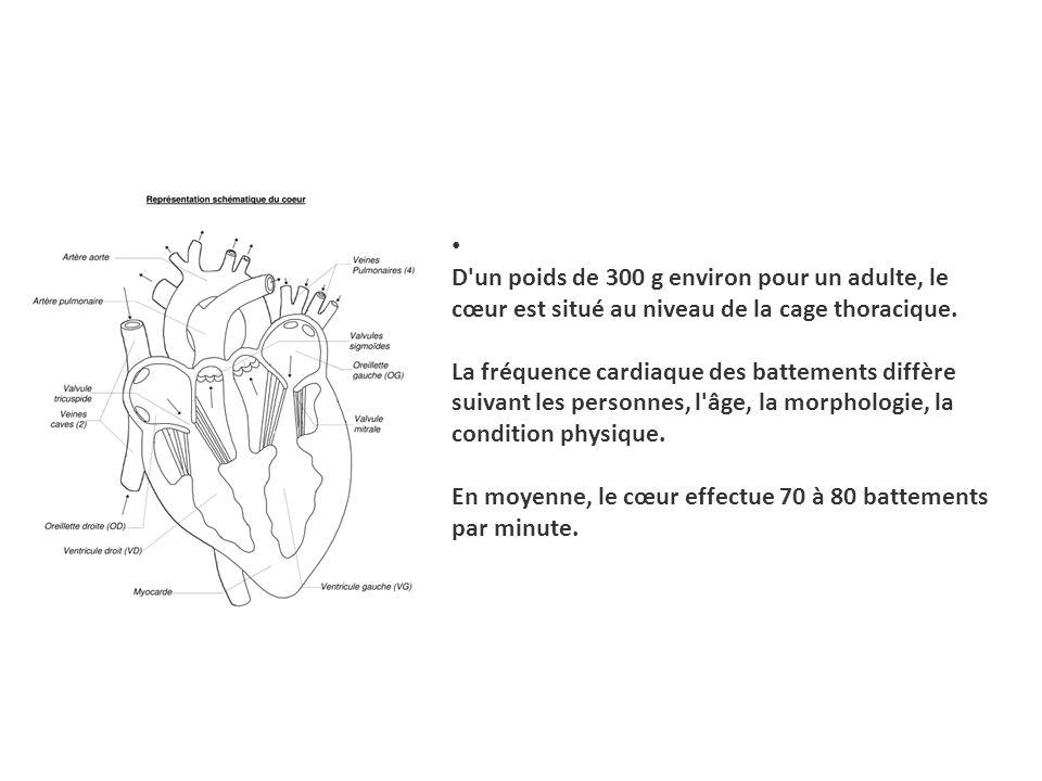 D un poids de 300 g environ pour un adulte, le cœur est situé au niveau de la cage thoracique. La fréquence cardiaque des battements diffère suivant les personnes, l âge, la morphologie, la condition physique. En moyenne, le cœur effectue 70 à 80 battements par minute.