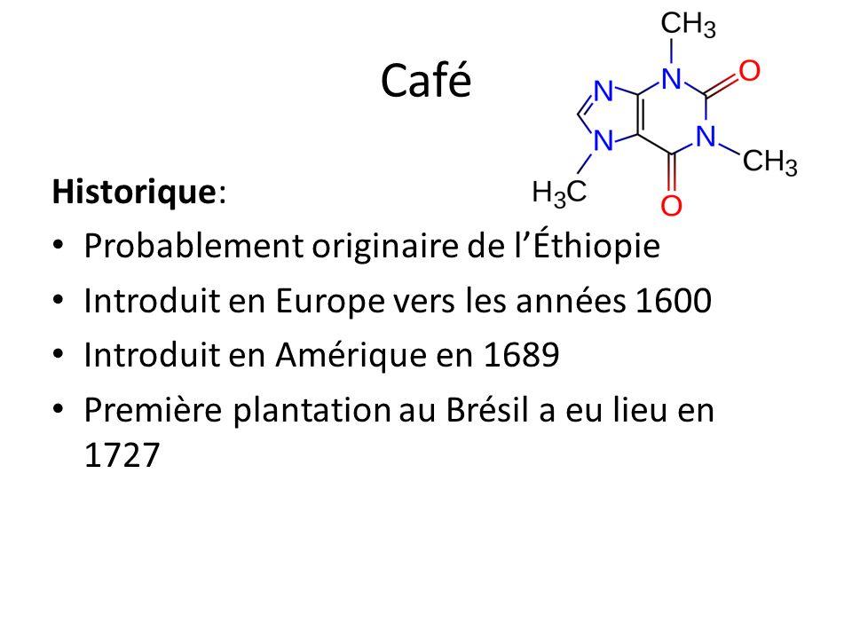 Café Historique: Probablement originaire de l'Éthiopie