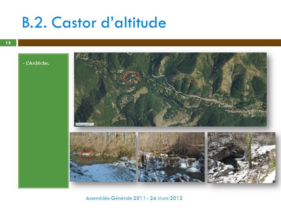 B.2. Castor d'altitude - L'Ardèche.