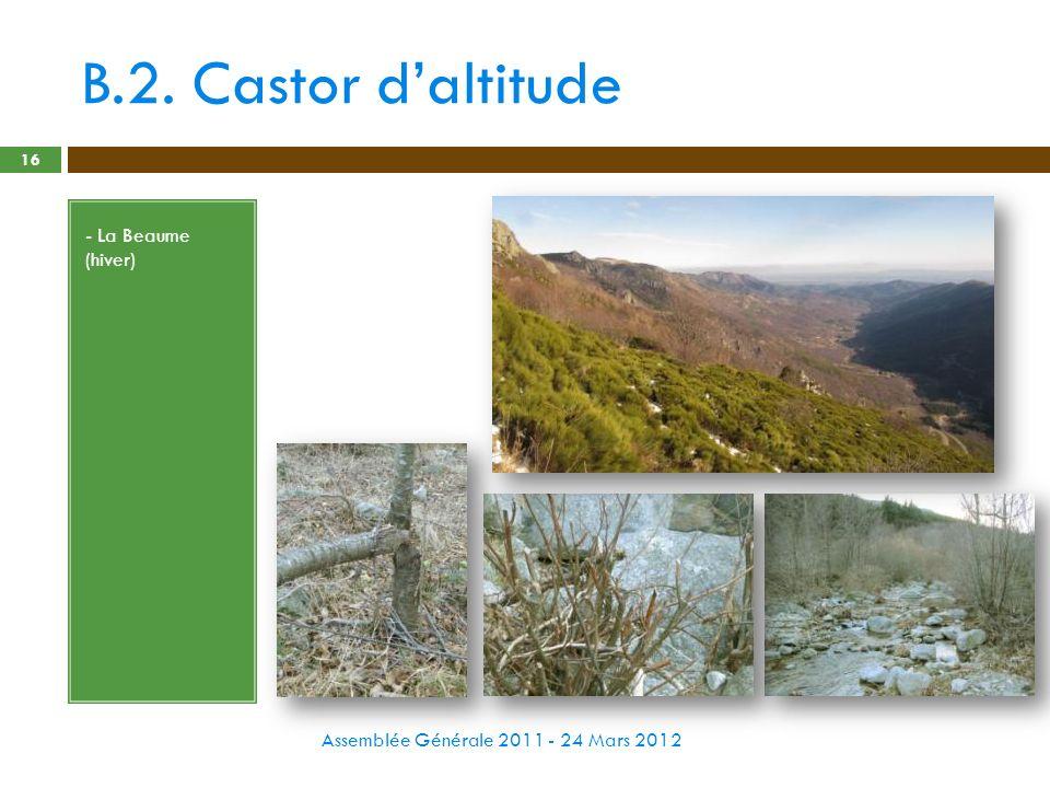 B.2. Castor d'altitude - La Beaume (hiver)
