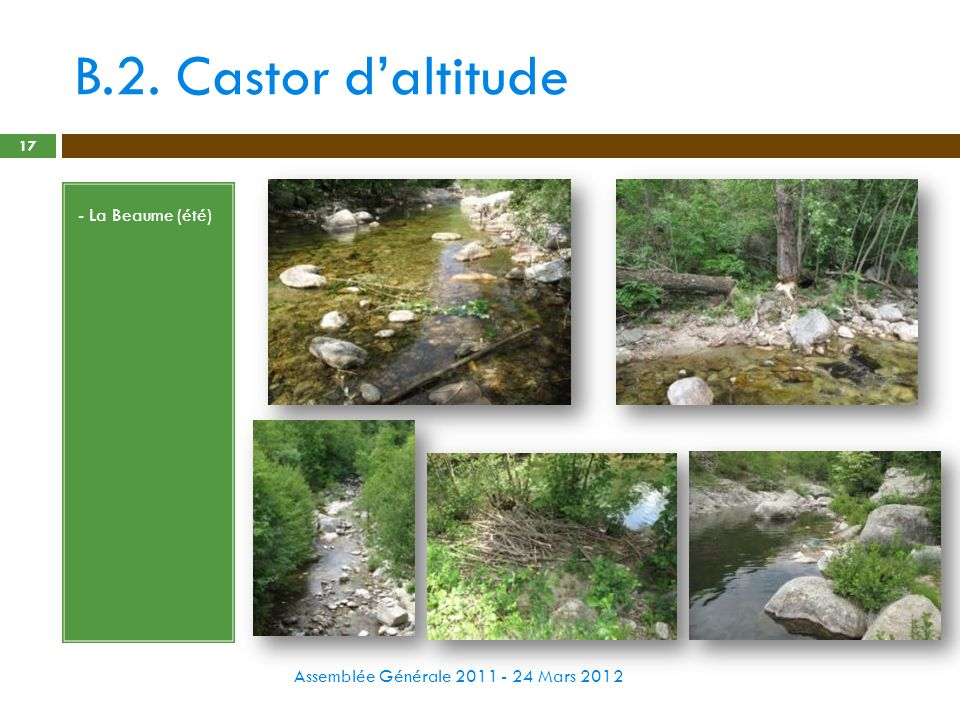B.2. Castor d'altitude - La Beaume (été)