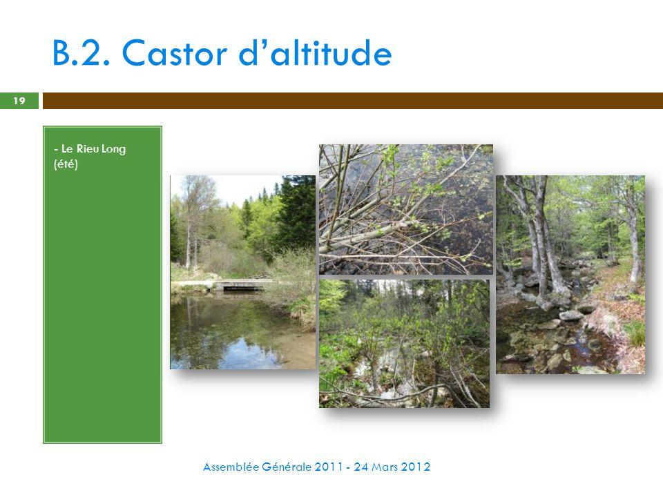 B.2. Castor d'altitude - Le Rieu Long (été)